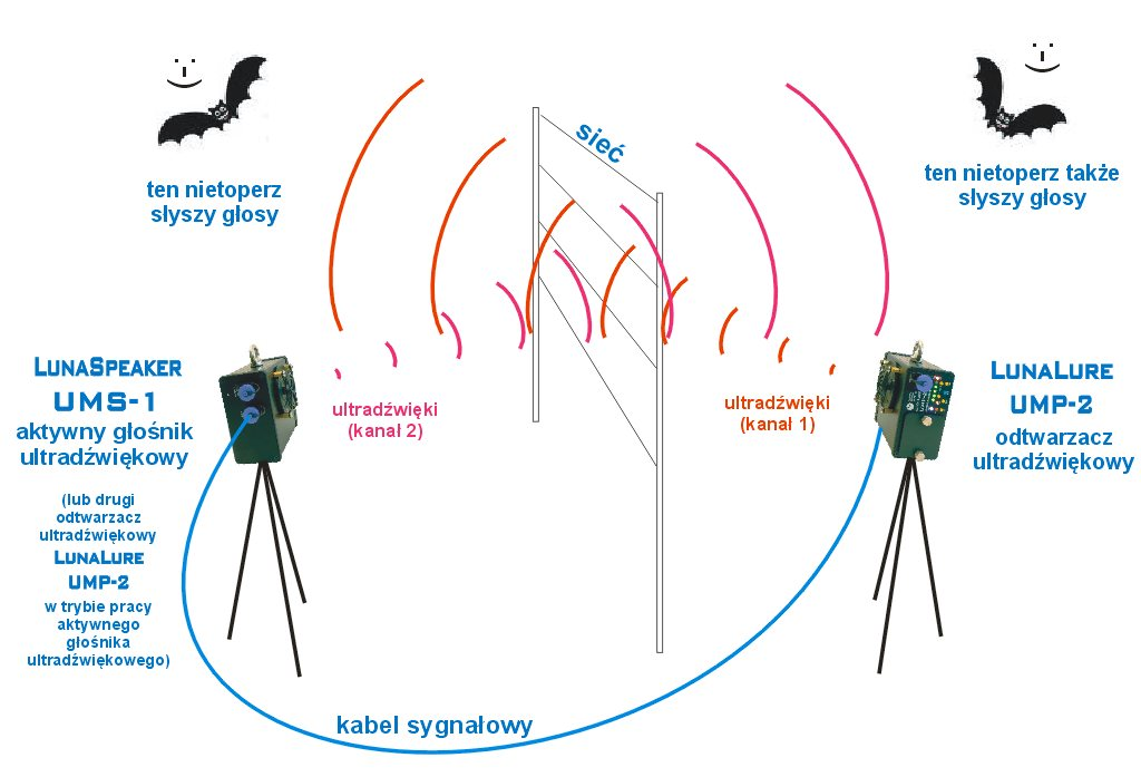 Standardowe ustawienie przy dwukanałowym wabieniu nietoperzy
