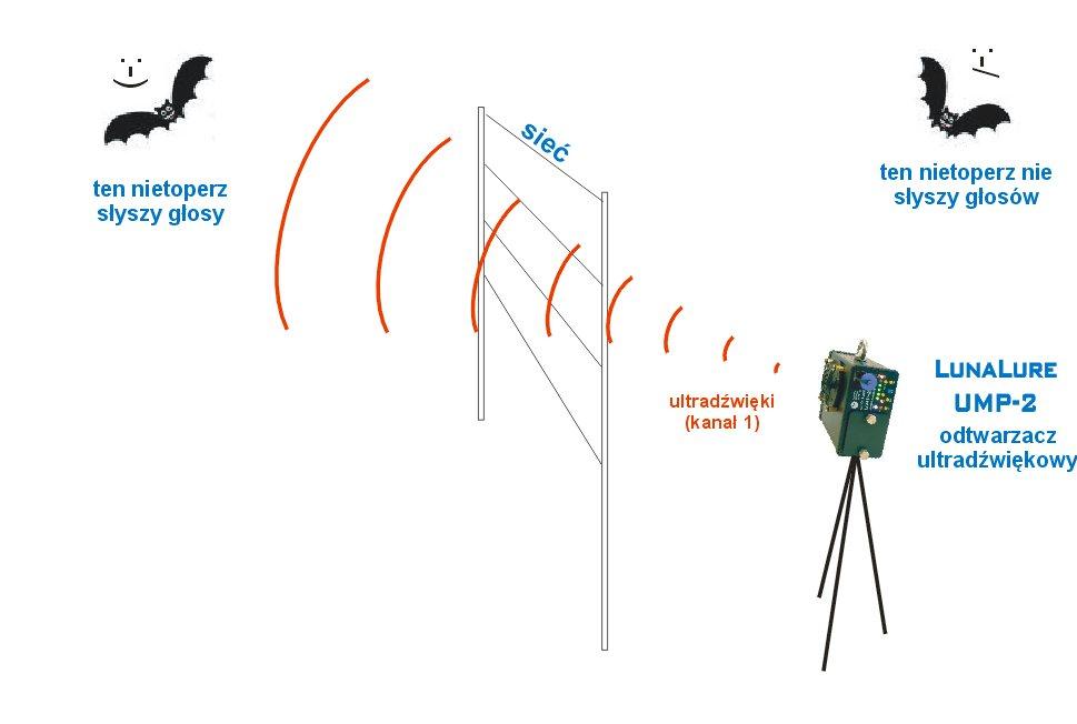 Standardowe ustawienie przy jednokanałowym wabieniu nietoperzy